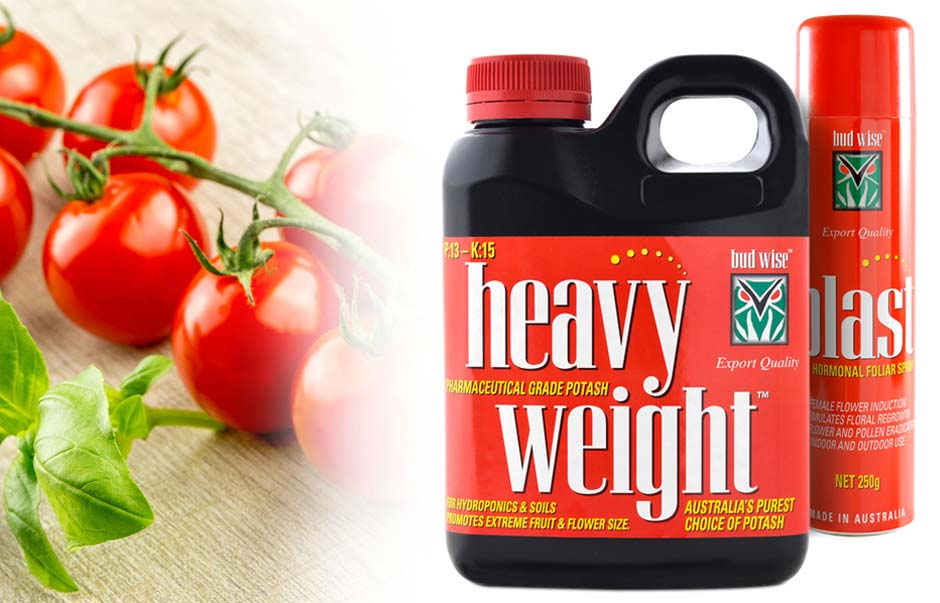Icon Graphic Design Adelaide - packaging page image of Bud Wise Heavy Weight label design.